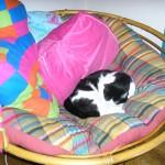 Let Sleeping Kittehs Lie